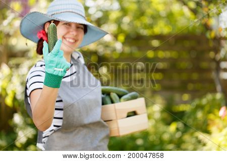 Farmer in hat holds cucumber in hand and box under arm