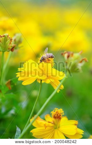 photo of a beautiful bee in flower amazing and flower a sunny day