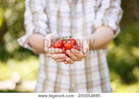 Young agronomist in plaid shirt with cherry tomatoes in hands