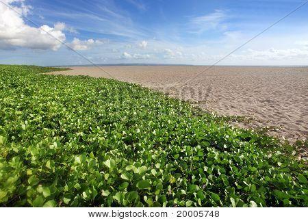 plant on beach
