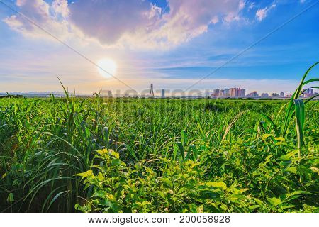 Rural riverside view with grassland and sunset in Taipei