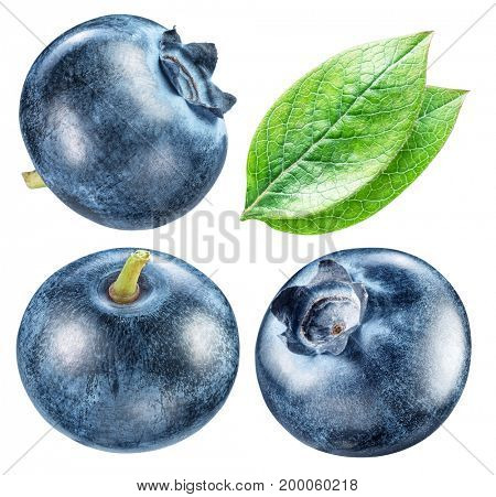 Blueberries and blueberries leaves. Macro shot. Clipping paths for each item.