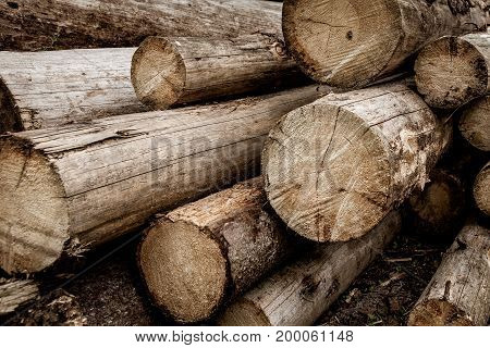 Wooden Logs. Wood preparation in russian forest
