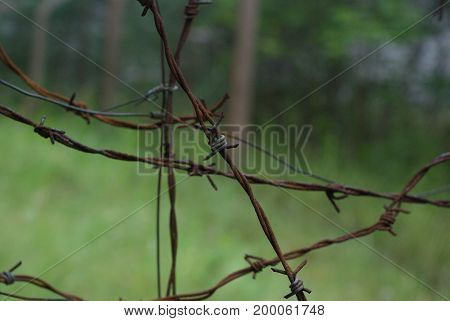 Old and rusty barbed wire in nature