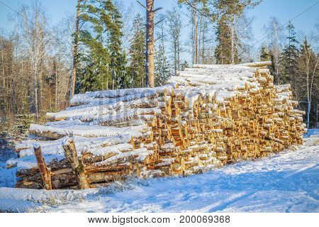 Wooden logs in forest covered with snow