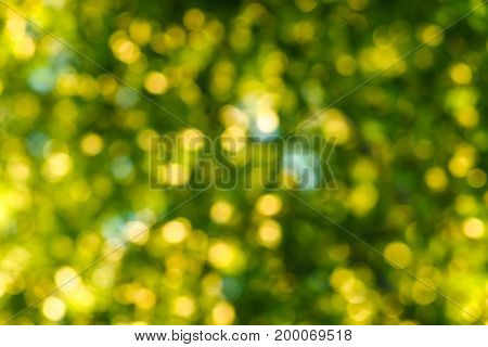 blurred colourful festive flare bokeh beautiful background