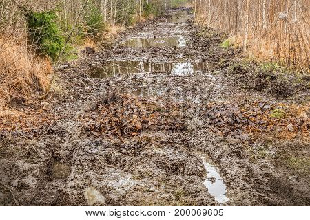 Mud rutted road in the woods .