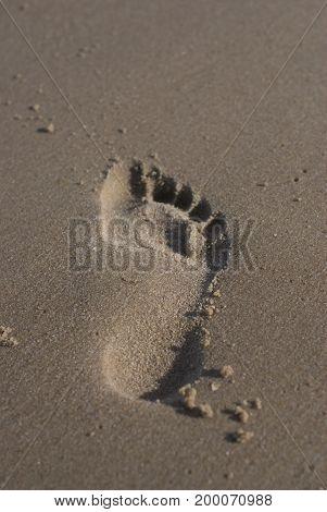 Footprint in damp sand on the beach