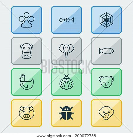 Zoology Icons Set. Collection Of Hen, Cobweb, Baboon And Other Elements