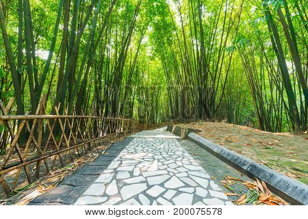 A footpath in a bamboo forest in Chendu, China
