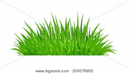 Green grass. Lawn plant. Isolated white background. Vector illustration.