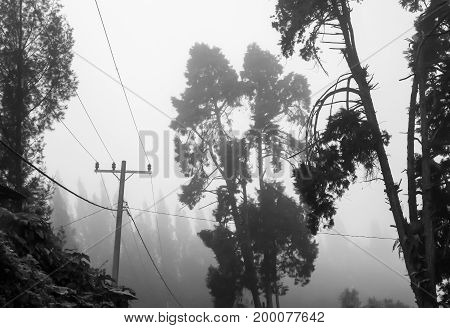 Trees electricity pole and wires in foggy clouds. Dramatic black and white scene.