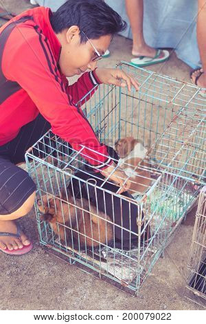Bali, Indonesia - August 15, 2017: Puppy Dogs In The Cage In Adoptation Center Of Bali Island, Indon