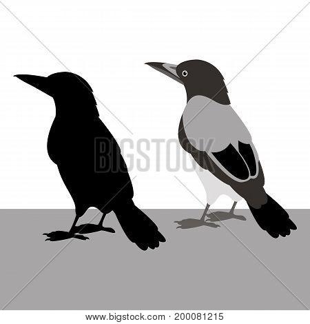 magpie vector illustration  black silhouette set profile
