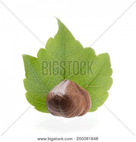 Close up of a Hazelnut with Leaf