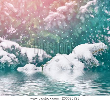 Blurred christmas background. Trees in the snow. Winter Forest