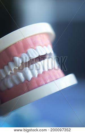 Dentistry Teaching Tooth Model