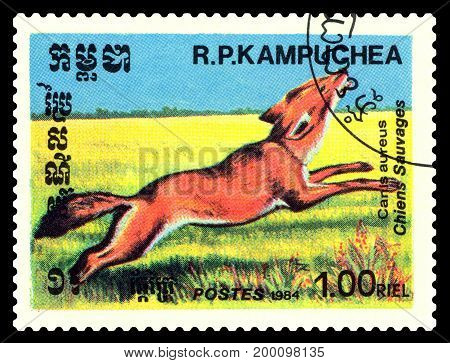 STAVROPOL RUSSIA - August 08 2017 : A Postage Stamp Printed in the Cambodia Shows Aureus (Canis aureus) circa 1984