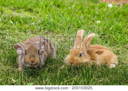 two young rabbits on green grass in spring