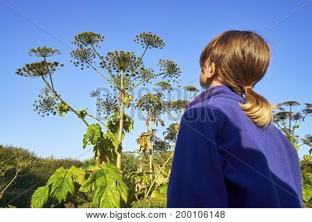 Shot of a young girl standing in front of a giant hogweed