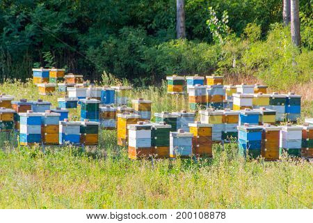 Colourful beehives. Beehives with bees in a honey farm