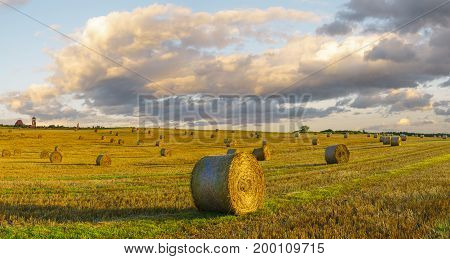 Straw hedges in the field after the harvest