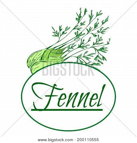 Absinthe ingredients. Fresh sweet fennel (Foeniculum vulgare). Hand draw. For used for wallpaper printing on the packaging paper textiles. poster