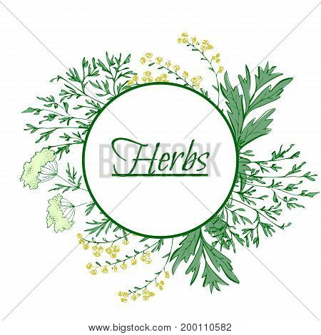 Aromatic medicinal herbs. Grand wormwood green anise sweet fennel. Hand draw. For used for wallpaper printing on the packaging paper textiles.