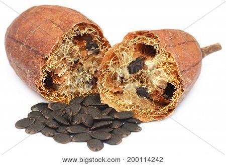Natural scrubber of dried Ridge gourd with seeds over white background