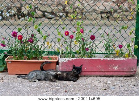 gato mamando de su madre tumbado en el suelo poster