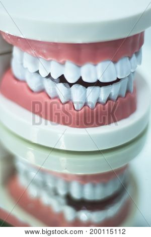 Dental Teeth Mouth Model