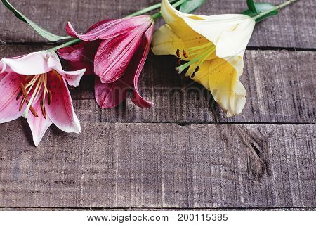 Colorful Lily Flowers On Rustic Wooden Background. Gorgeous Bloom, Yellow Red  Pink Lilies On Rustic