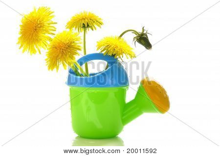 Dandelions In A Children's Watering Can