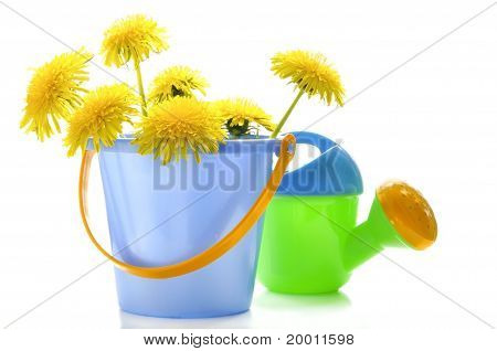 Dandelions And Children's Toys