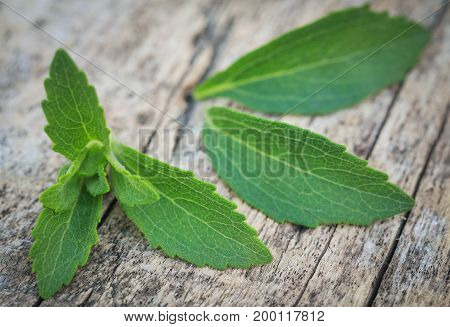 Closeup of Stevia leaves on wooden surface