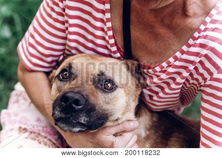 Happy Dog Portait, Woman Hugging Cute Mongrel Dog Outdoors, Big Eyed Puppy Looking At Camera With To