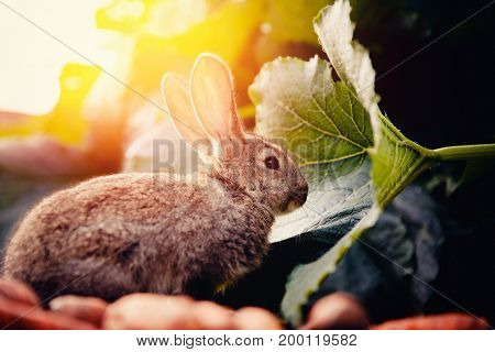 brownish gray little rabbit on a light green background. Concept farm.