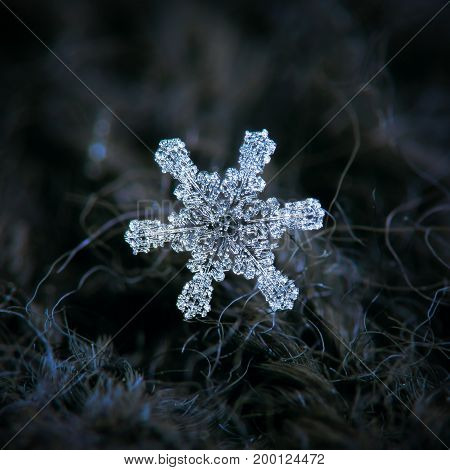 Real snowflake macro photo: large star plate snow crystal with six straight, simple arms and big hexagonal center, glowing on dark background. Snowflake completely covered by frozen drops of rime.