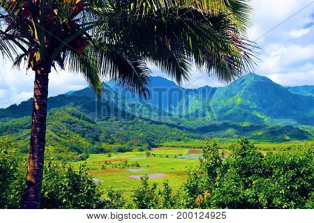 Lush green agricultural pasture surrounded by a tropical landscape with mountainous terrain taken in rural Kauai, HI