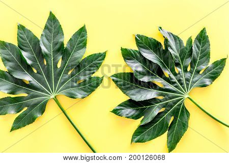 big jungle leaves on yellow background top view.