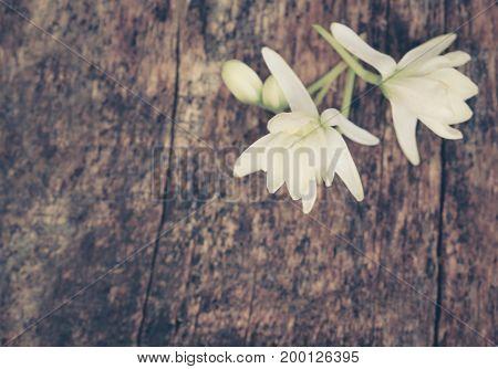 Closeup of Medicinal moringa flowers in timber surface