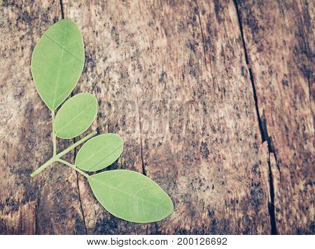 Closeup of Edible moringa leaves in timber surface