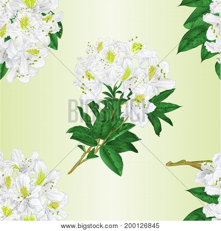 Seamless texture branch White flowers rhododendron vintage vector editable illustration hand draw