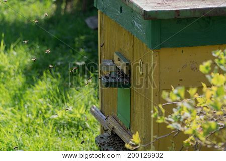 Hive Of Bees In The Suburban Area. The Bees Fly Into The Hive