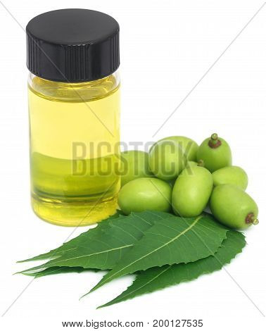 Medicinal neem leaves and fruits with essential oil over white background