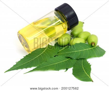 Medicinal neem leaves with essential oil over white background