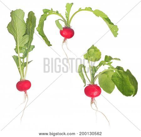 three red radishes with green leaves isolated on white background