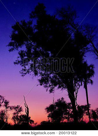 Twilight In Africa