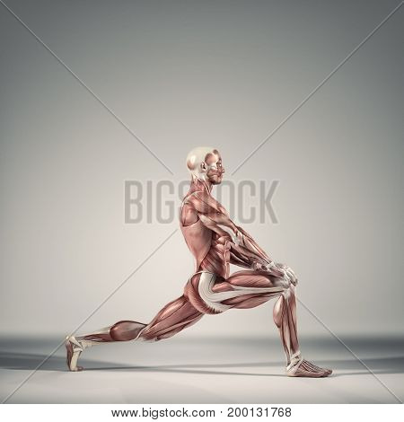 Man performs ground exercises.The muscular system. This is a 3d render illustration