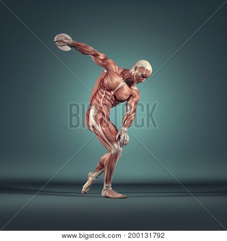 The sportman throwing disc. The muscular system. This is a 3d render illustration